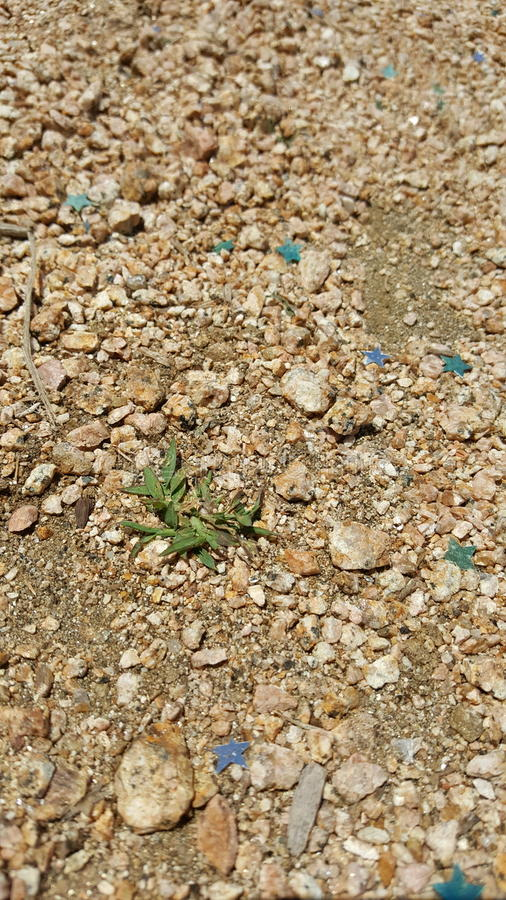 Fairy trail royalty free stock image