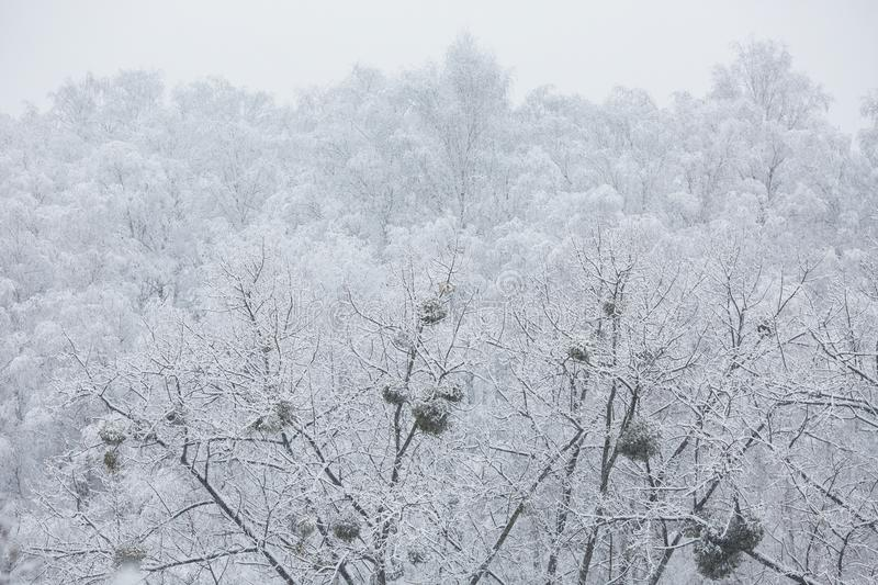 Fairy winter forest in the snow. royalty free stock photography