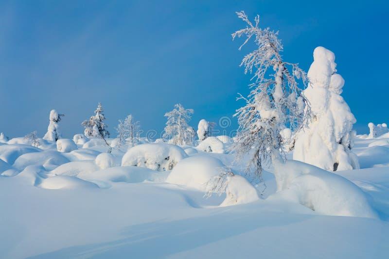 Fairy Winter Landscape royalty free stock photo