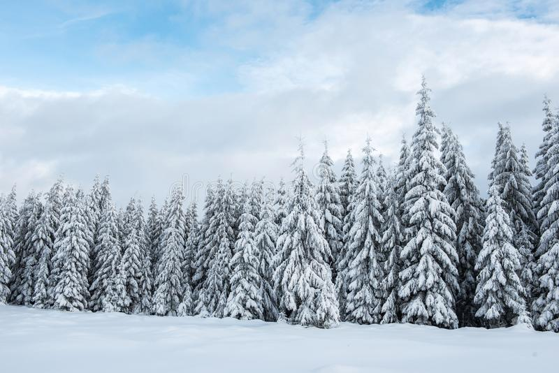 Fairy winter landscape with fir trees royalty free stock photography