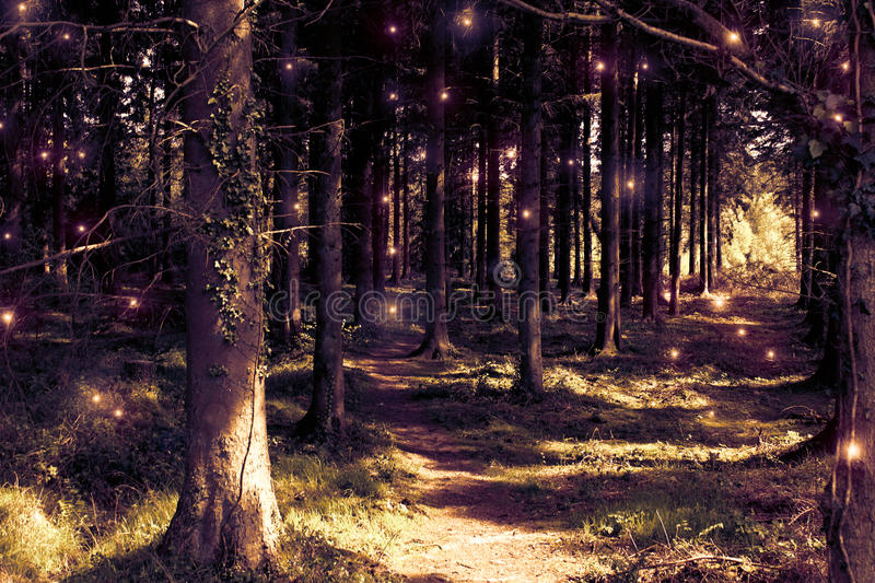 Fairy Woodland Concept stock photography