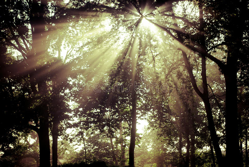Download Fairytale forest stock photo. Image of lost, beams, luminosity - 10504940