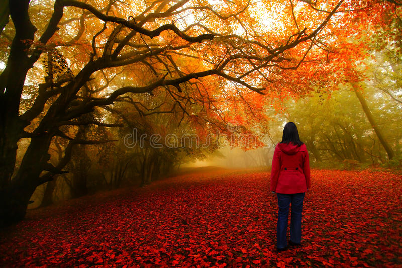 Fairytale forest red path. Fairytale forest path with a girl wearing a red jacket