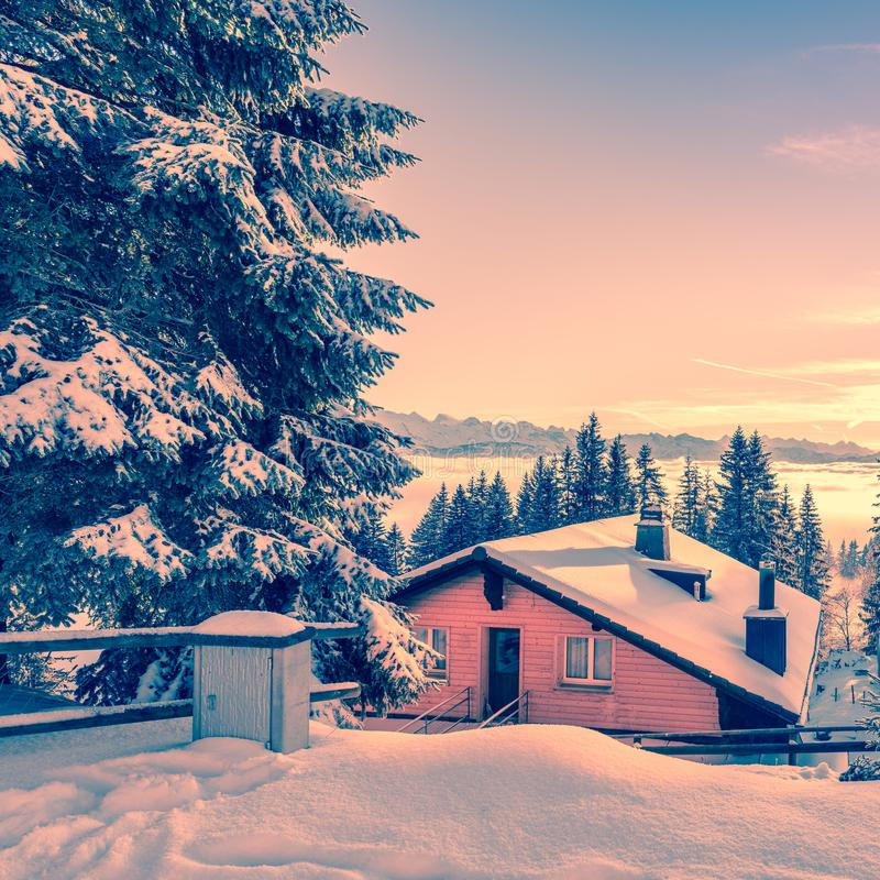 Fairytale forest in winter royalty free stock photos