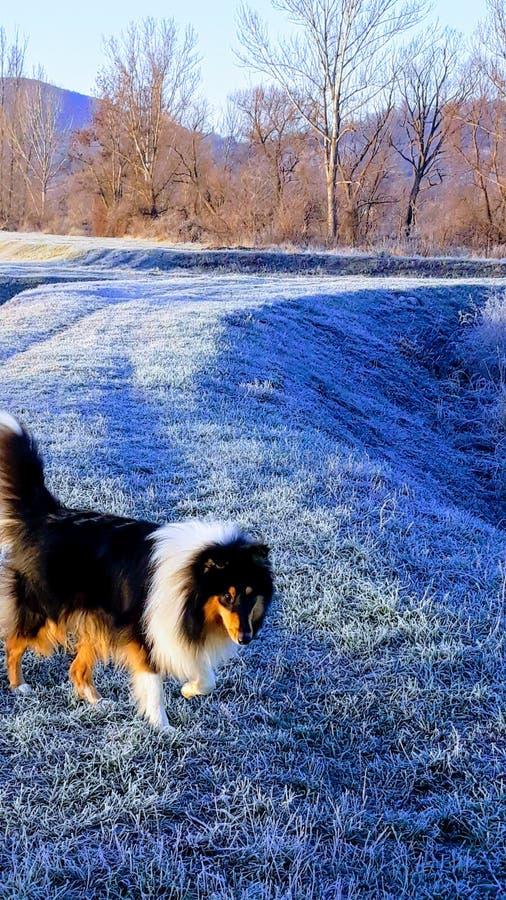 Fairytale helado en diciembre y el perro foto de archivo libre de regalías