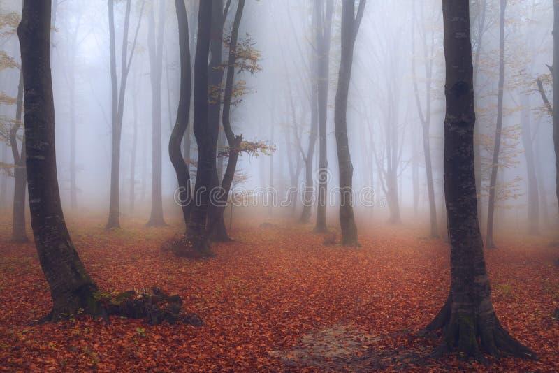 Fairytale mistig bos en sleep door de bladeren stock fotografie