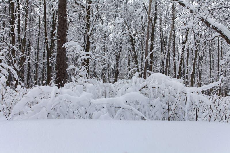 Fairytale Schneeparklandschaft kaltes Winterwetter, schneebedeckte Bäume und Büsche Tiefkühltiefe selektiv stockbilder