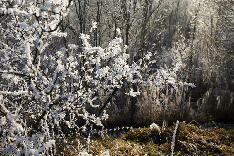 Download Fairytale Snowy Winter Countryside With Frosted Icy Trees And Plants Stock Photo - Image: 83700454