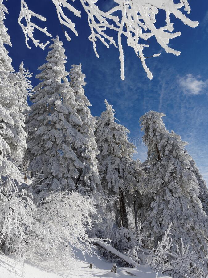 Fairytale winter royalty free stock images