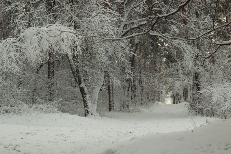 Fairytaleweg in de winter snow-covered bos royalty-vrije stock foto