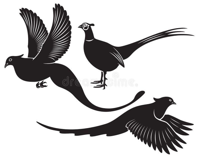 faisão ilustração do vetor