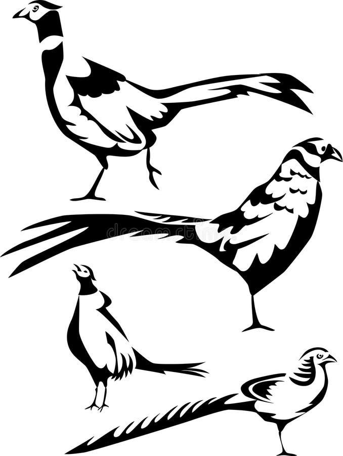 Faisão ilustração stock