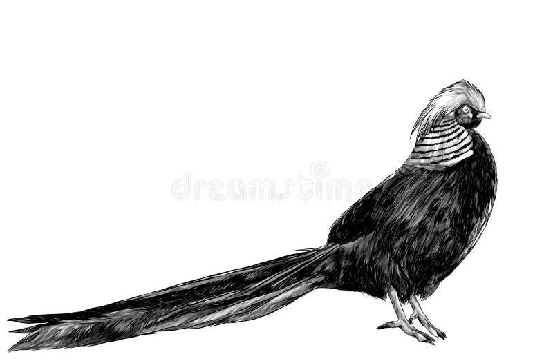 Faisão dourado do pássaro ilustração royalty free