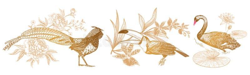 Faisão e lírio das peônias, do tucano e da orquídea, da cisne e de água vi ilustração royalty free