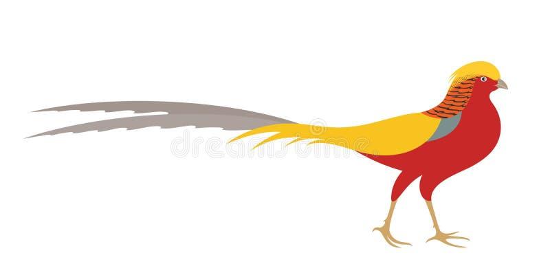 faisão Faisão dourado ilustração royalty free