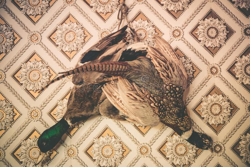 Faisan et Duck Taxidermy images stock
