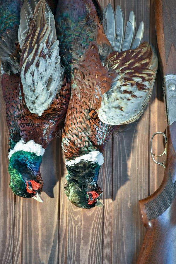Faisans masculins et une arme à feu, sur un vieux fond en bois Saison de chasse photographie stock libre de droits