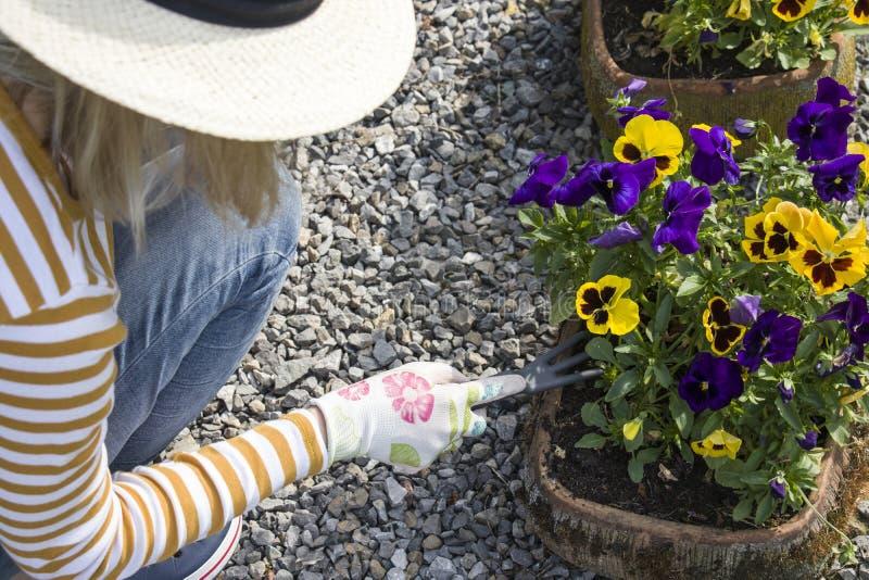 Faisant du jardinage et plantant des fleurs dans l'arrière-cour photographie stock