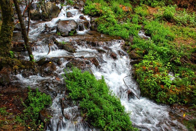 Faisceau de fleuve et d'arbre de lumi?re photos stock
