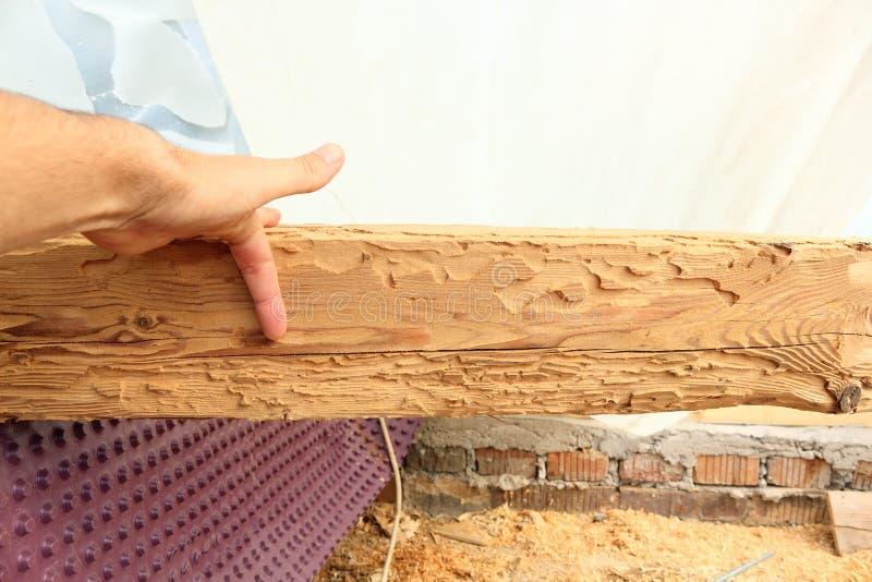 Faisceau en bois montrant l'attaque d'insecte image libre de droits