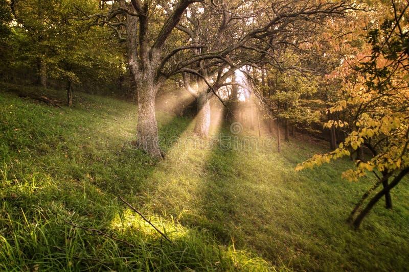 Faisceau lumineux photographie stock libre de droits