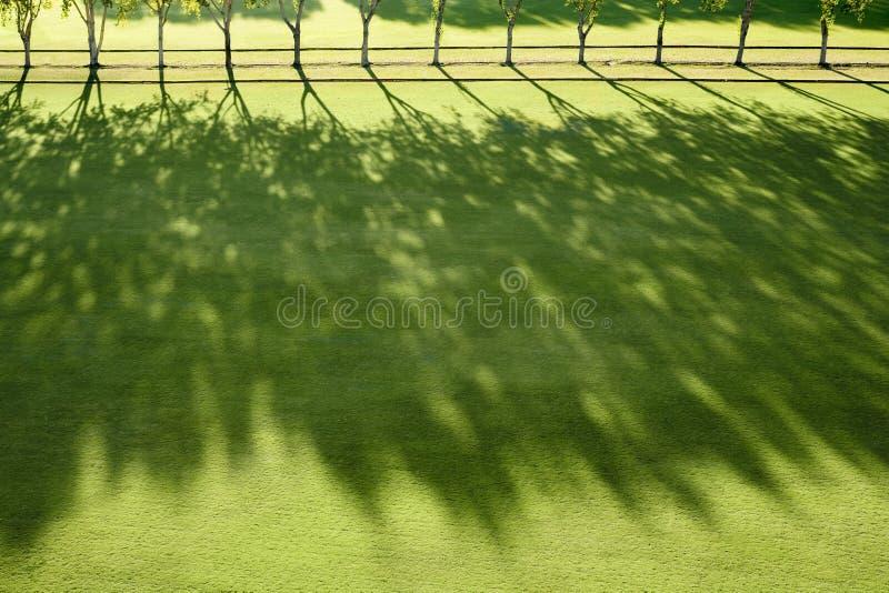 Faisceaux de Sun dans un domaine de polo images stock