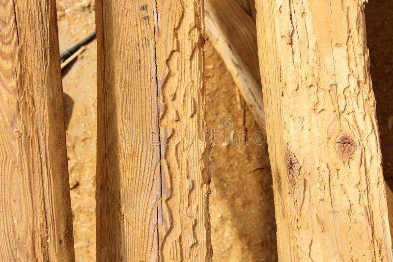 Faisceaux en bois de construction détruits par attaque d'insecte photos libres de droits