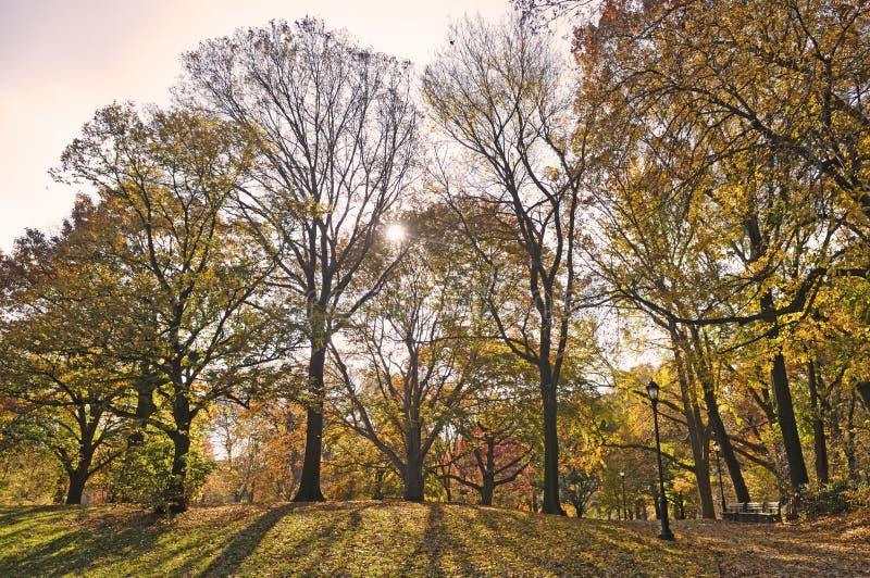 Faisceaux solaires effectuant à la voie par des arbres photographie stock libre de droits