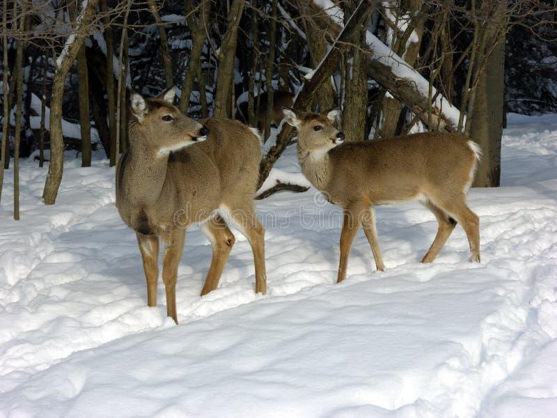 Fait en neige de l'hiver image libre de droits