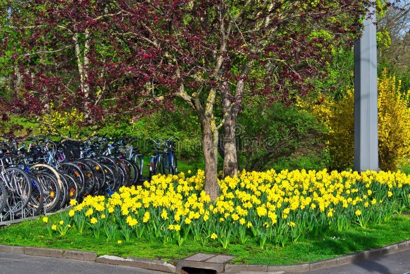 Faites du vélo le parking par le jardin de tulipe de côté de route image stock