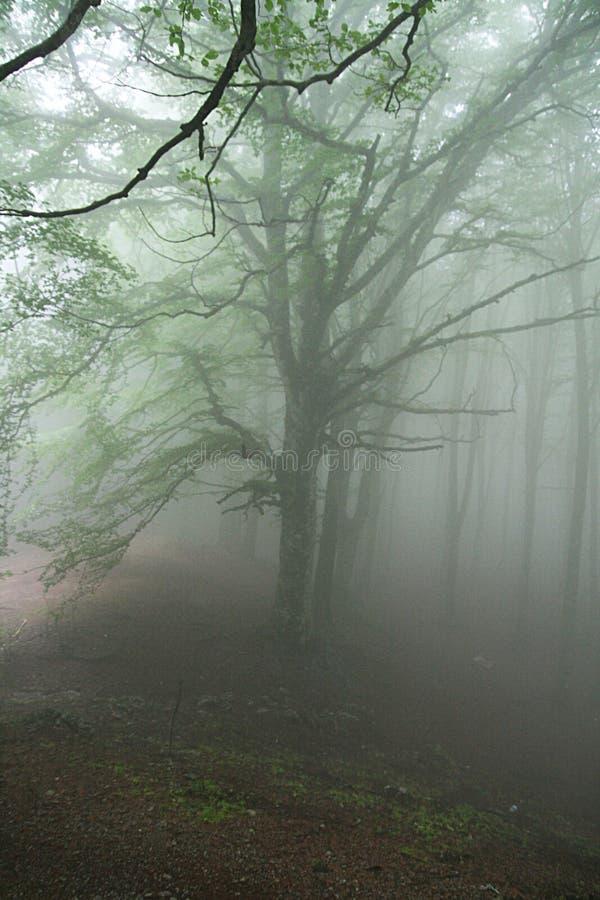 Faito дерева тумана стоковое фото rf