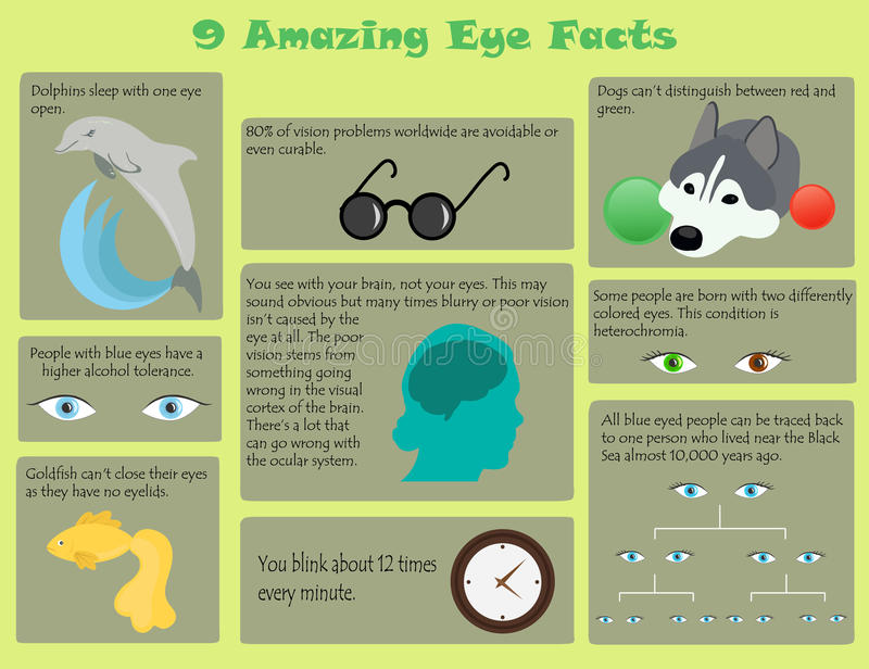 Faits d'oeil d'Infographic illustration stock