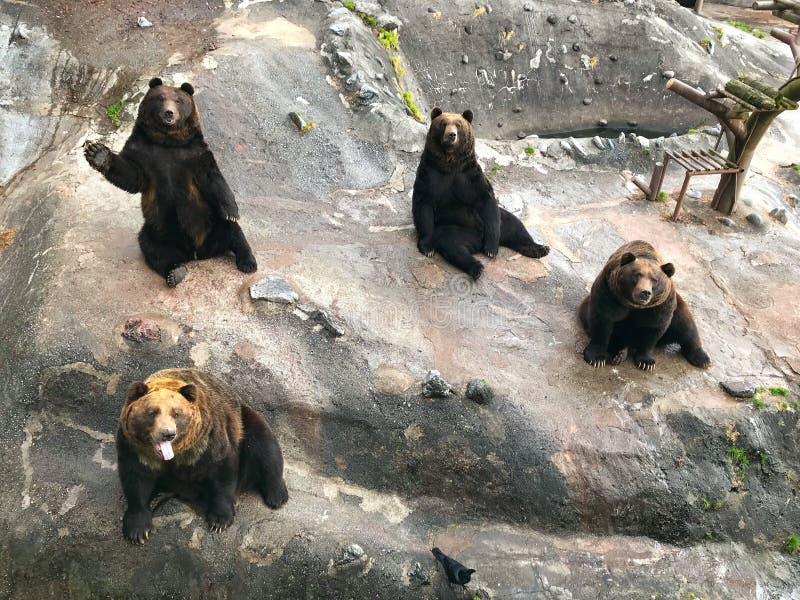 Faixa bonito do urso no parque do urso imagem de stock