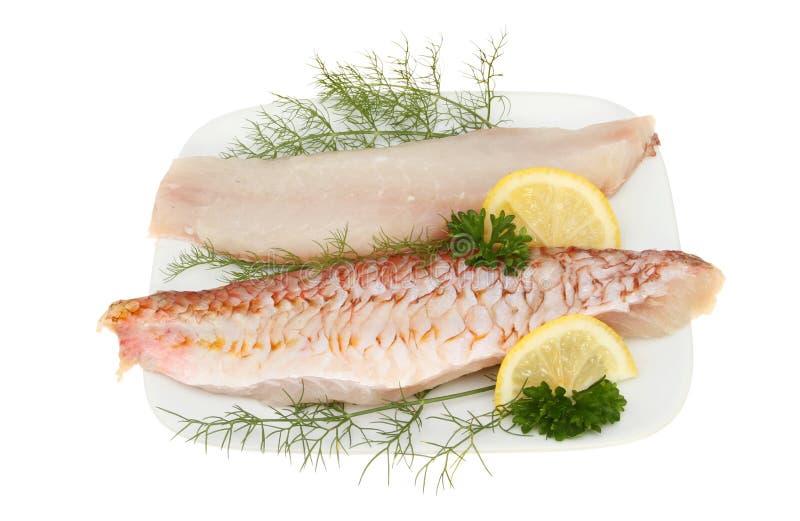Faixas do salmonete vermelho foto de stock