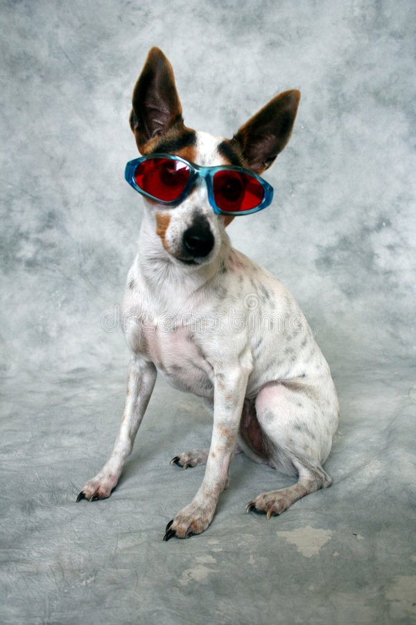 fajny pies zdjęcia stock