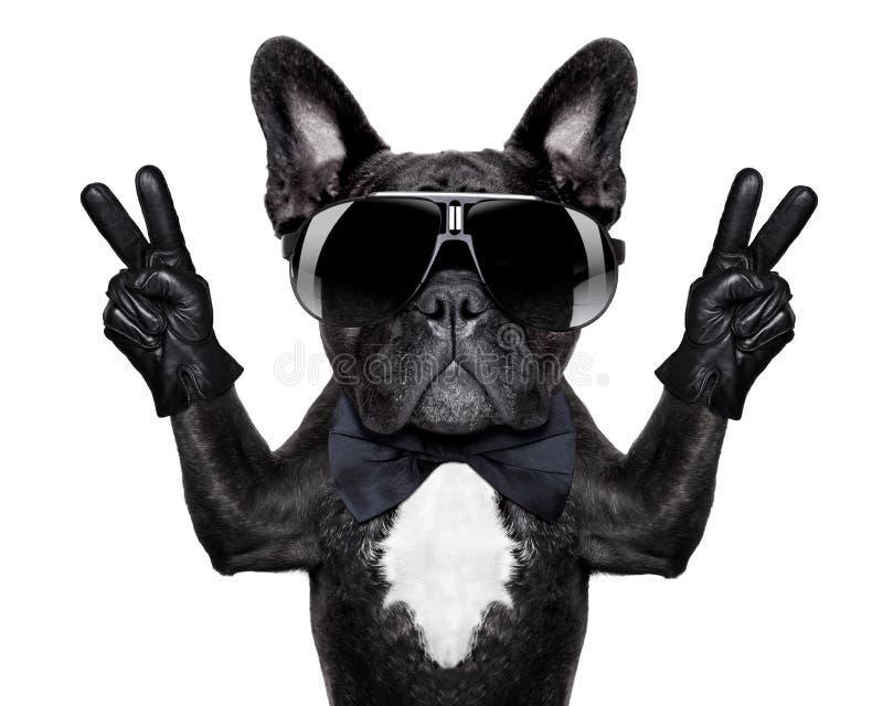 fajny pies zdjęcia royalty free