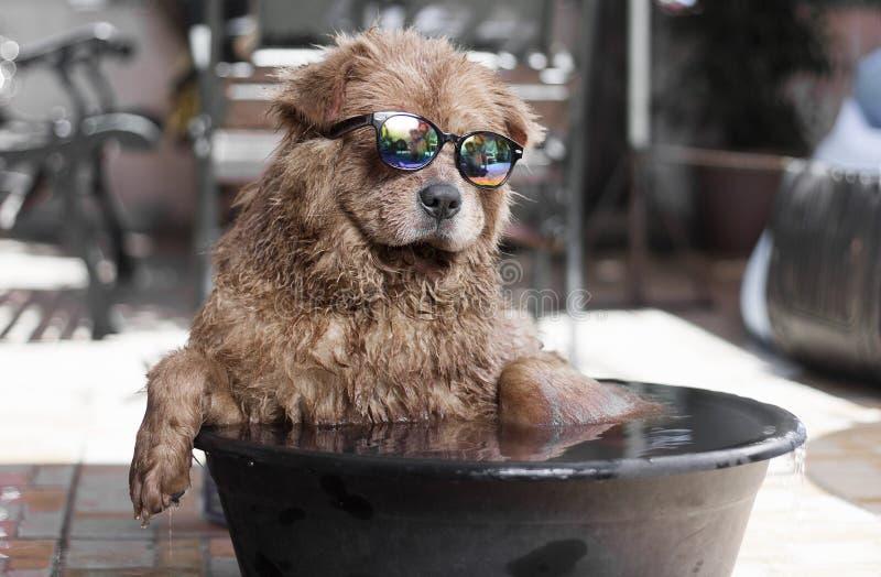 fajny pies obraz stock