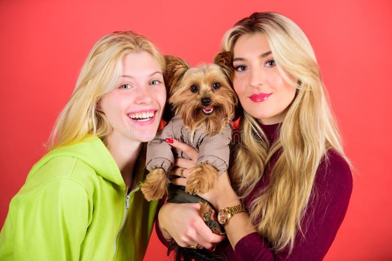 fajny pies pet Yorkshire Terrier traken kocha socjalizację Blondynek dziewczyny adorują małego ślicznego psa Kobiety uściśnięcie  fotografia stock