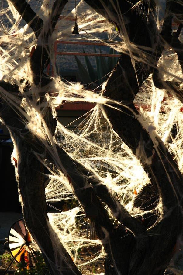 fake Halloween spiderwebs on tree stock photo