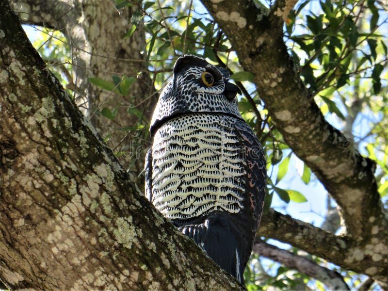 Fake owl stock photo