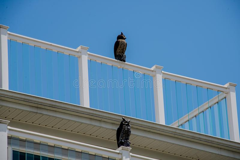 Fake owls used to deter seagulls at a resort building stock photography