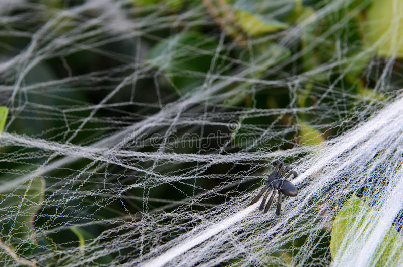 download fake small halloween spider decoration on bush with web stock photo image