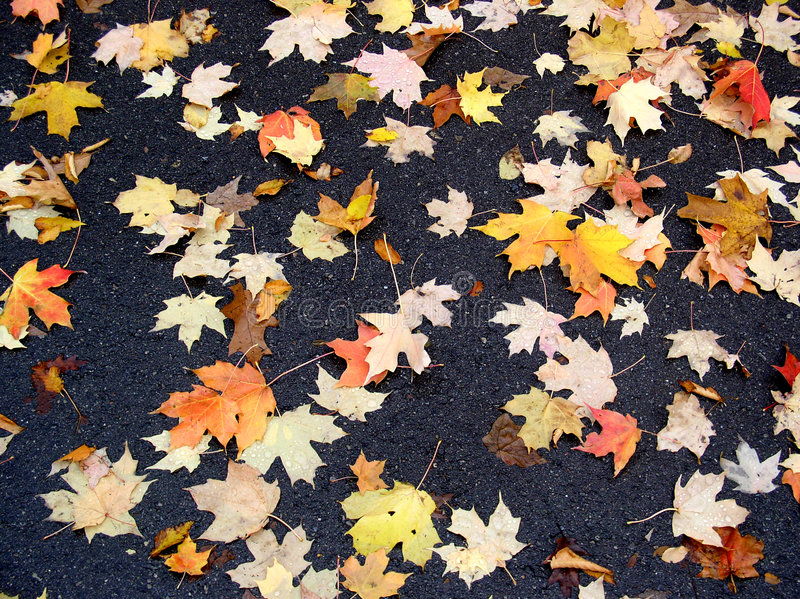 Download Fal leaves stock image. Image of golden, covered, road - 1067475