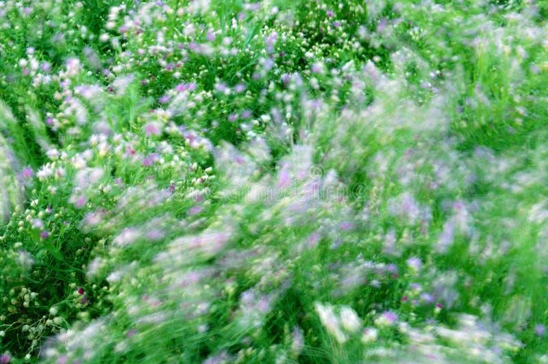 fal wietrznego kwiaty obraz royalty free
