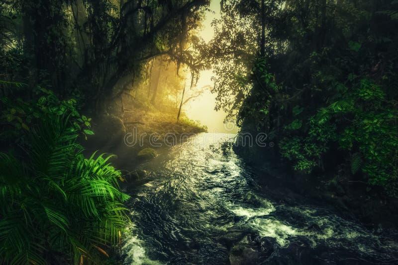 Falaise cascade dans la forêt tropicale verte et rayons du soleil images libres de droits