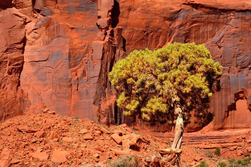 Falaise et arbre rouges photos stock