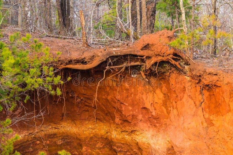 Falaise et racines d'arbre de canyon de Providence, Etats-Unis photos stock