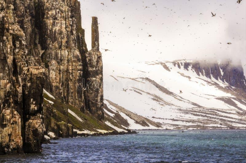 Falaises avec des milliers d'oiseaux de mer Roosting dans l'océan arctique images stock