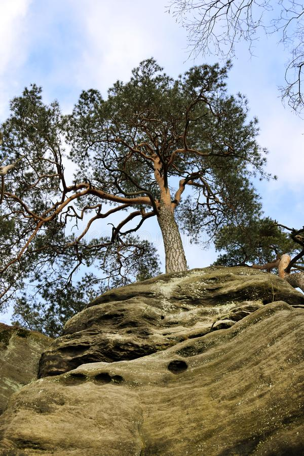 Falaises de grès dans le paradis de Bohème - les roches de Prachov - arbre sur le dessus photographie stock