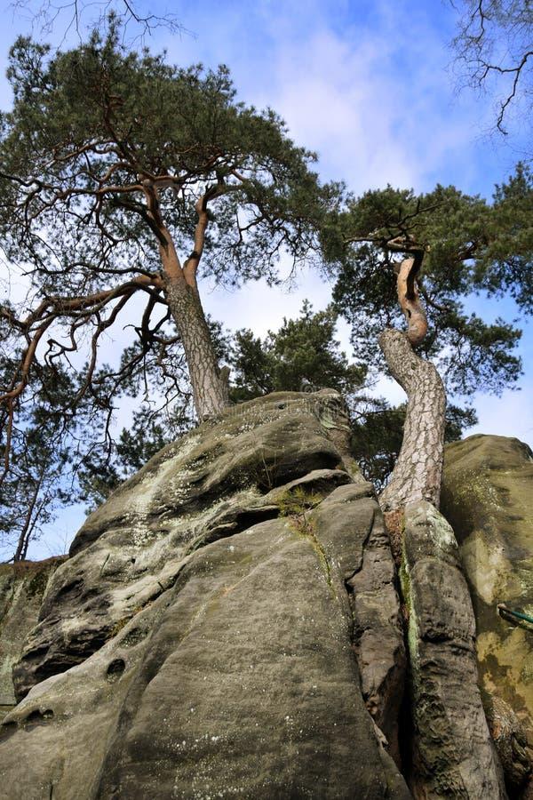 Falaises de grès dans le paradis de Bohème - les roches de Prachov - arbre sur le dessus images stock
